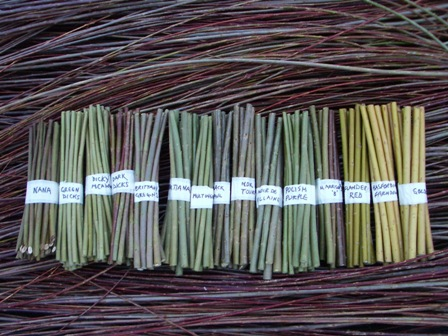 willow cuttings from Dunbar Gardens
