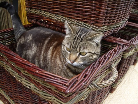 spike-in-basket