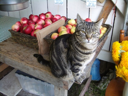 Spike the farmstand greeter