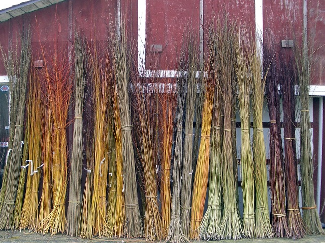 willow harvested at Dunbar Gardens