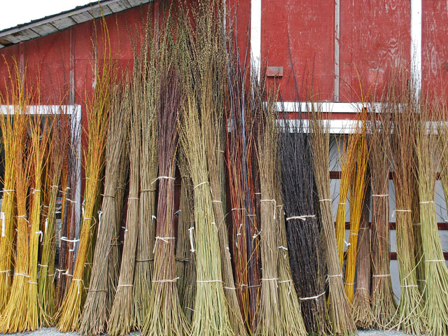 harvested basketry willow