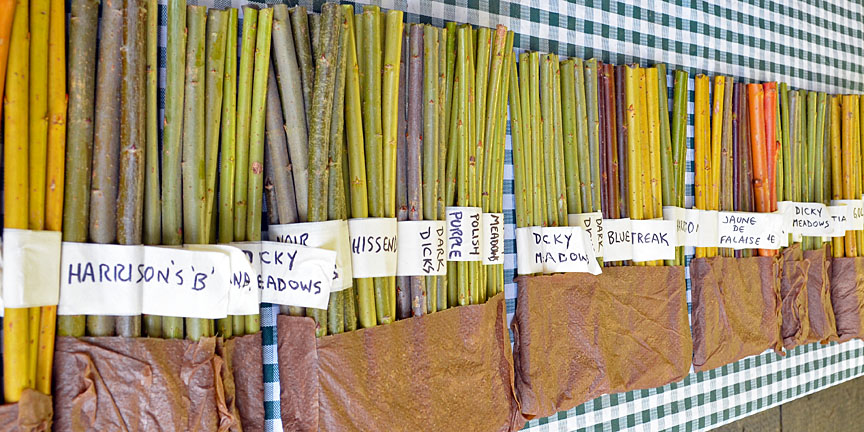 basketry willow cuttings from Dunbar Gardens