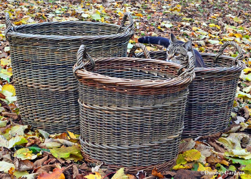 Spike inspects willow baskets