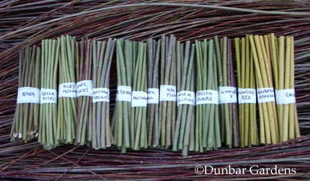 Dunbar Gardens willow cuttings