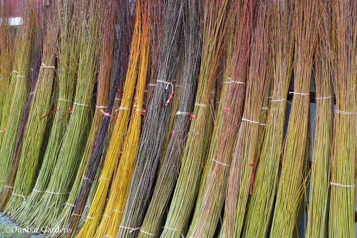 Basket Weaving Supplies Uk : Willow cuttings for sale in the usa