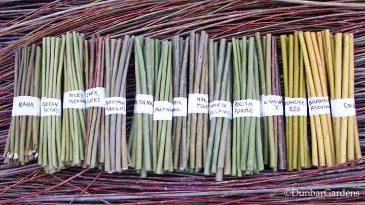willow cuttings for sale