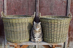 Katherine Lewis willow baskets with Spike the basket cat