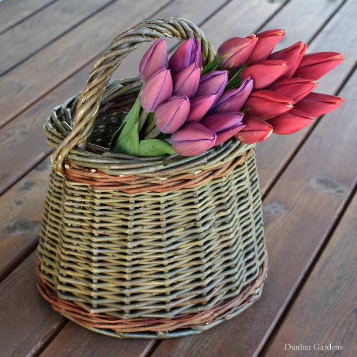 Katherine Lewis willow basket and Skagit Valley tulips